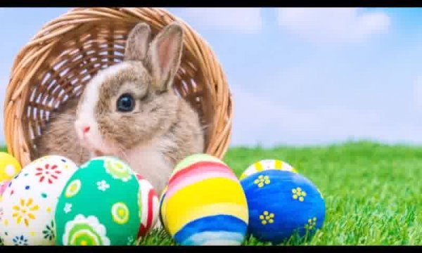 Páscoa, renascimento, esperança, amor e libertação. Feliz Páscoa!!!