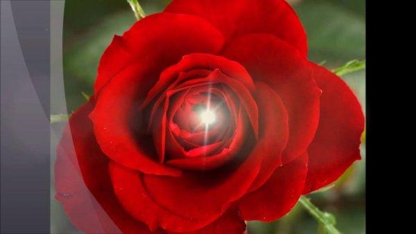 Vídeo com mensagem para o Dia dos Namorados, você é o amor da minha vida!!!