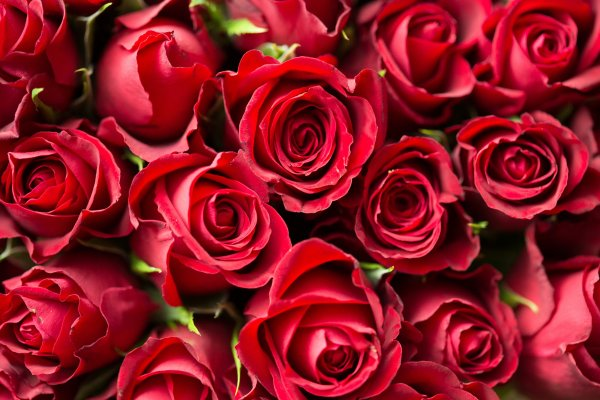 Mensagem de aniversário para esposo - Meu amor, hoje o dia está mais belo!