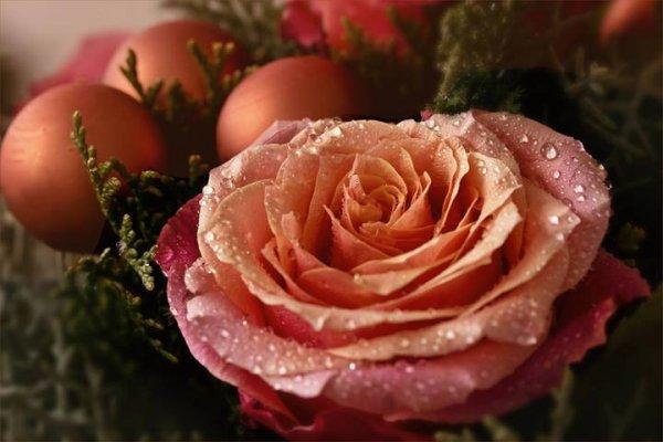 Mensagem de Feliz Natal para madrinha, obrigada pela dedicação!!!