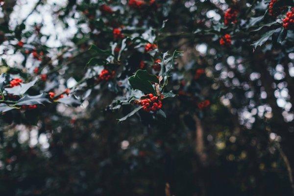 Mensagem De Natal existência de Deus - Uma linda mensagem para compartilhar!