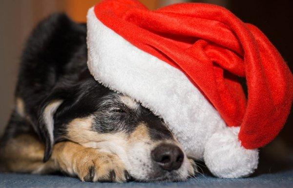 Mensagem De Natal Linda Para Amigos - O espírito do Natal!